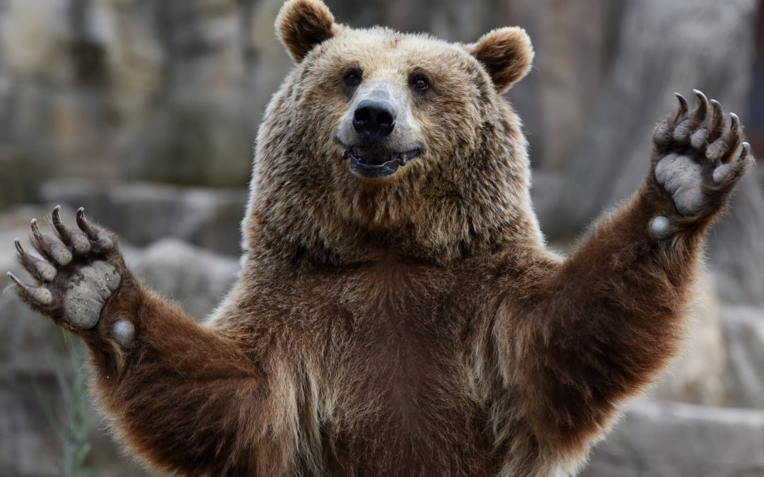 These stocks are already in a bear market amid Monday's market sell-off